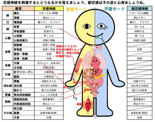 交感神経支配図