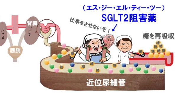 SGLT2阻害薬