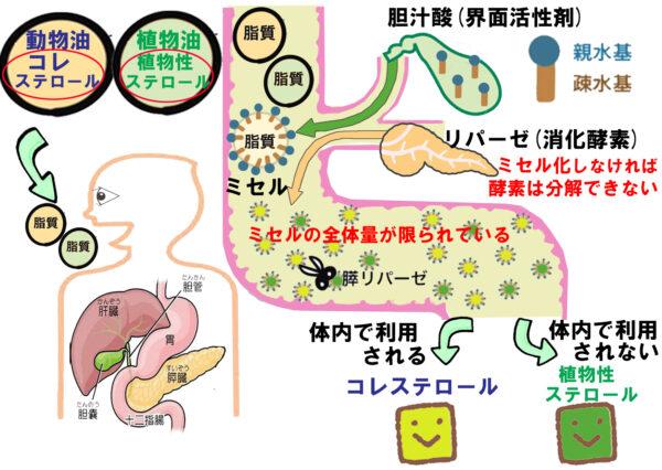 植物性ステロール